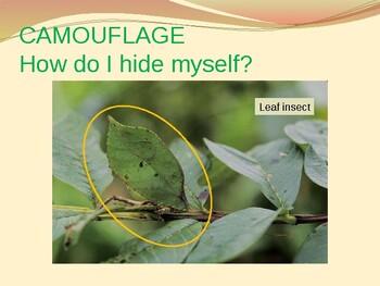CAMOUFLAGE: How I Hide myself?