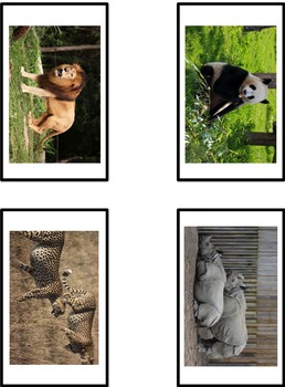 CAN HAVE ARE Visual Support w/ picture choices DESCRIBE ANIMALS INSECTS