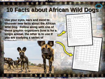 CANINES BUNDLE - 7 visually engaging PPT w facts, video links, handouts & more