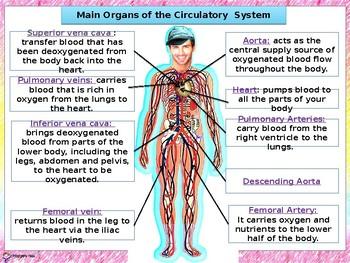 THE CARDIOVASCULAR SYSTEM- PPT AND STUDENT'S NOTES