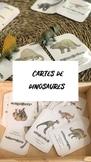 CARTES DE DINOSAURES (Catalan)