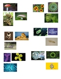 CC Cycle 1 Kingdoms of Living Things Stick-On Activity