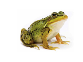 CC: EngageNY ELA First Grade Fairy Tales: The Frog Prince Part 1