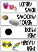 CC Science Vocabulary Word Wall