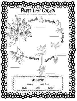 CCSS Aligned Plant Life Cycle & Plant Needs Bundle with Diagrams and Foldable!
