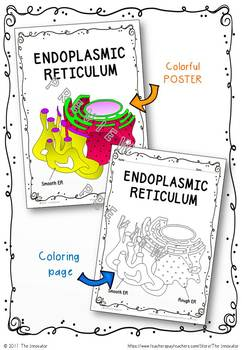 "CELL - ENDOPLASMIC RETICULUMN (ER) - ""Doodle Notes"""