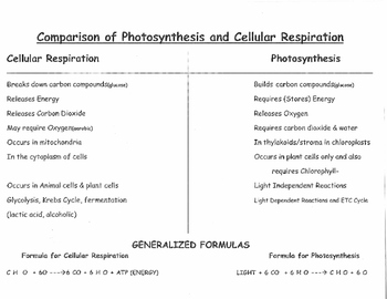 CELL ENERGY: PHOTOSYNTHESIS & CELL RESPIRATION