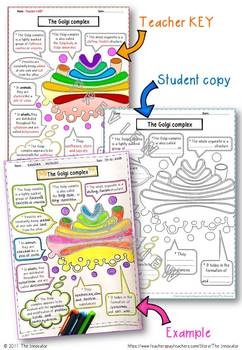 """CELL – GOLGI COMPLEX - """"Doodle Notes"""""""