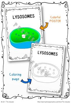 "CELL - LYSOSOMES - ""Doodle Notes"""