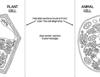 Cells blank plant animal cell diagrams note takingassessment by cells blank plant animal cell diagrams note takingassessment ccuart Images