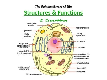 CELLS: Structures and their Functions