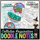 Cellular Respiration Science Doodle Notes with PowerPoint & Quiz