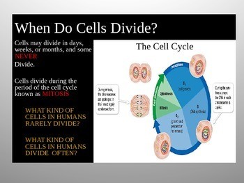 CHAPTER 10-11 CELL GROWTH  & DIVISION