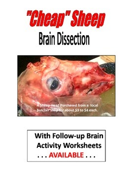". ""CHEAP"" SHEEP Brain Dissection  11-PAGES  EXCELLENT followup LAB"