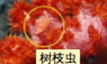 CHINESE Animals and Plants Unit Bundle