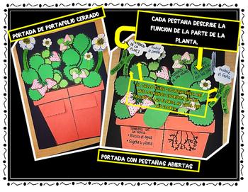 CICLO DE VIDA DE UNA PLANTA - SPANISH ONLY