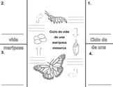 CIclo de vida de una mariposa (foldable)