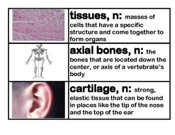 CKLA Core Knowledge Grade 3 Domain 3 Human Body Vocabulary Cards