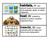 CKLA Core Knowledge Grade 2 Domain 8 Insects Vocabulary Cards