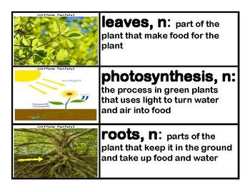 CKLA Core Knowledge Kindergarten Domain 4 Plants Vocabulary Cards