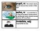 CKLA Core Knowledge Kindergarten Domain 2 The Five Senses Vocabulary Cards