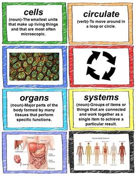 CKLA Domain 3 Lesson 1-Human Body Vocabulary