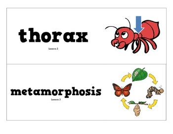 CKLA Grade 2 Domain 8 Insects Vocabulary Pack