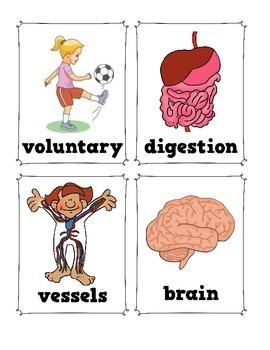 CKLA Human Body Vocabulary Pack, Grade 1