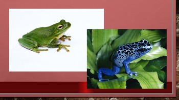 CKLA PowerPoint 3rd Grade Unit 2 - Lesson 7 - Frogs