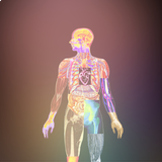 CKLA - The Human Body - Joints and Muscles