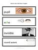 CKLA Word Wall 5 Senses