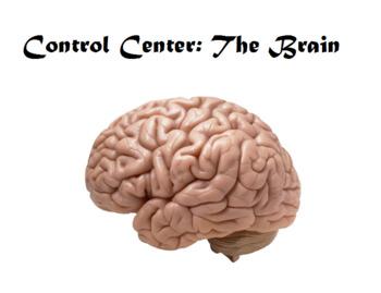 CKLA the brain