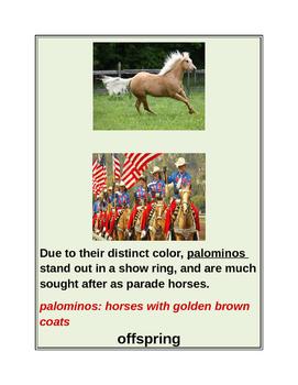 "CLOSE READING ~ ""HORSES"" ~ Journeys Common Core Trade Book Grade 4"