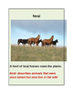"CLOSE READING ~ ""HORSES"" ~ Journeys Common Core Trade Book"