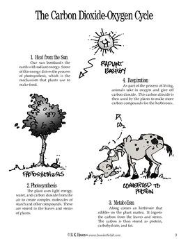 CO2 Exchange (Human Body)