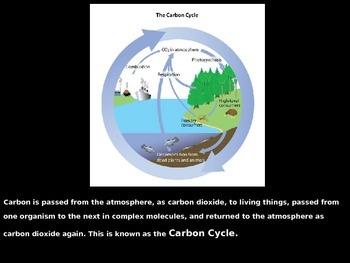 CO2-O2 Cycle Explained