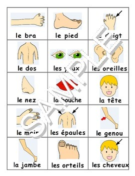 Parts of the Body / Les parties du corps FRENCH Workbook &