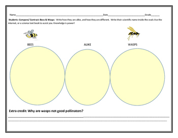 COMPARE/ CONTRAST: BEES & WASPS: CHARTING ACTIVITY