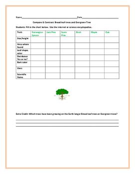COMPARE & CONTRAST: BROADLEAF & EVERGREEN TREES