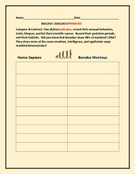 COMPARE & CONTRAST: PRIMATES: HOMO SAPIENS AND THE BONOBO MONKEYS