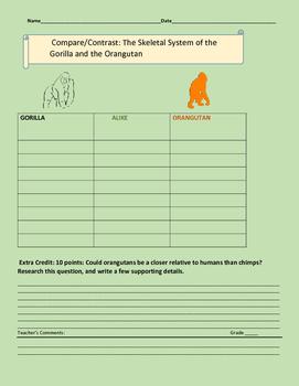 COMPARE/ CONTRAST: THE GORILLA & THE ORANGUTAN