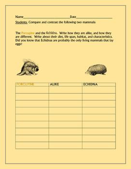 COMPARE/CONTRAST: THE PORCUPINE & THE ECHIDNA