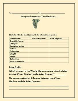 COMPARE & CONTRAST: TWO ELEPHANTS