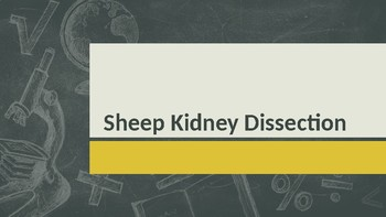 COMPLETE Sheep Kidney Dissection Powerpoint