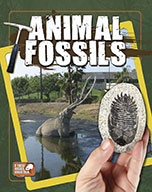 Animal Fossils (eBook)