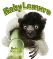 Baby Lemurs