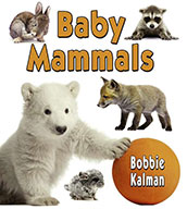 Baby Mammals (eBook)