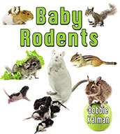 Baby Rodents (eBook)