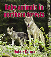 Baby animals in northern forests (eBook)