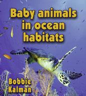 Baby animals in ocean habitats